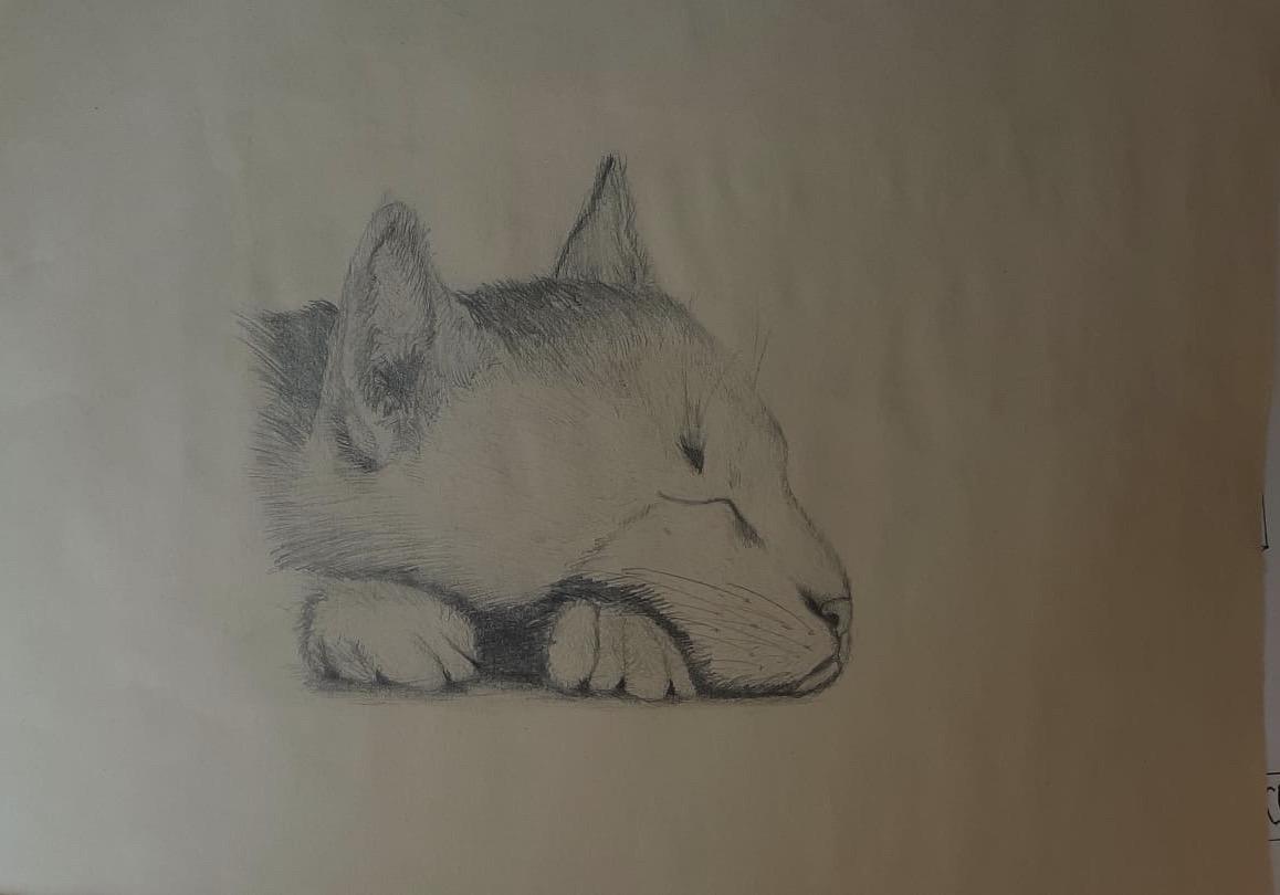 Coletti_disegni_2