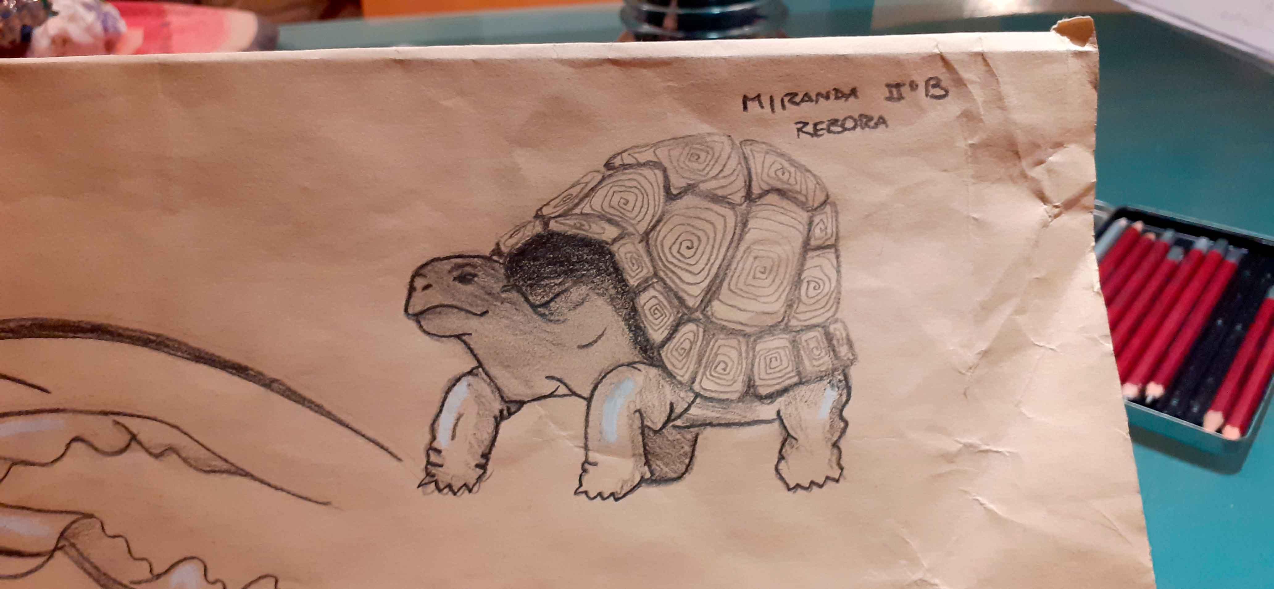 rebora_disegno6