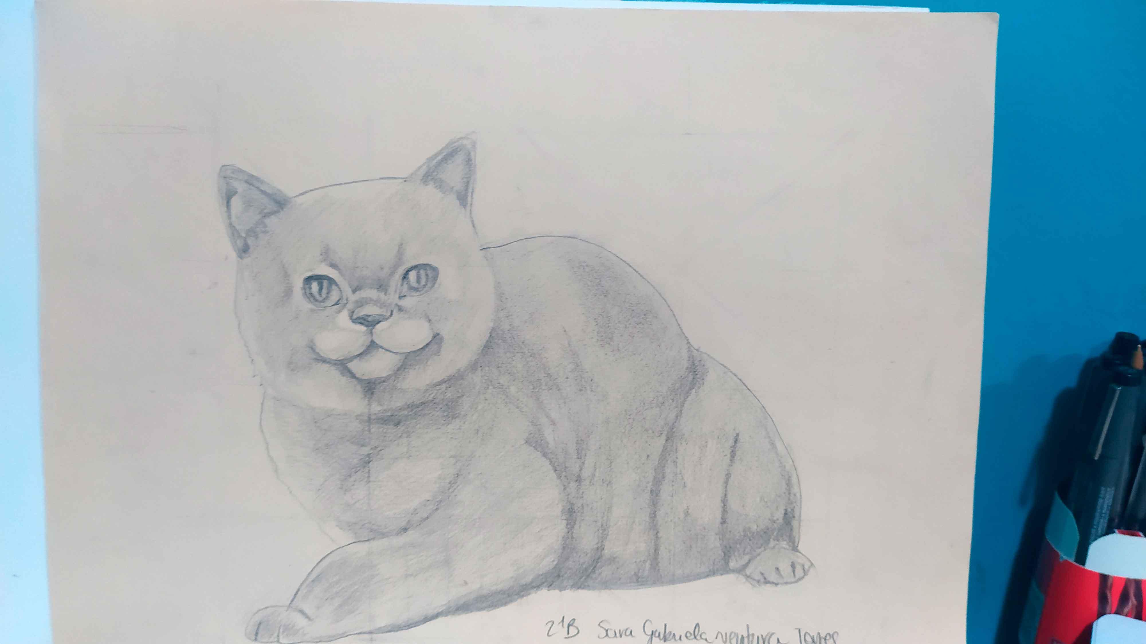 ventura_gatto